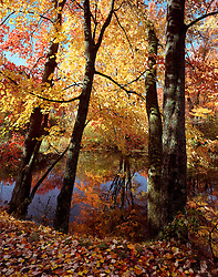 Fall foliage at Ashuelot River Park, Keene, New Hampshire.