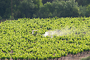 Pic St Loup. Languedoc. A tractor spraying with treatment in the vineyard. France. Europe.