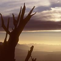 White Mts., CA. Sundset over Sierra Nevada bkg.