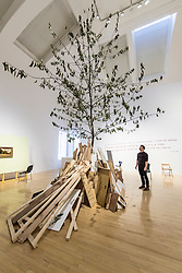 A huge cherry tree fills the interior of an Edinburgh gallery as part of an anarchic new show. <br /> <br /> Standing more than eight metres tall and scraping the ceiling of the University's Talbot Rice Gallery, the tree is the centrepiece of acts of display, a new exhibition from Glasgow-based artist Rob Kennedy.<br /> <br /> The tree was sourced from Edinburgh's Inverleith Park. Over the course of the show the leaves will fall and litter the indoor space. <br /> <br /> The work is a response to two paintings owned by the University, one by David Teniers called Peasants Playing Bowls and a second anonymous copy which is missing a tree and a male figure from the original.<br /> <br /> Pictured: Stuart Fallon, Assistant Curator, Edinburgh University Talbot Rice Gallery