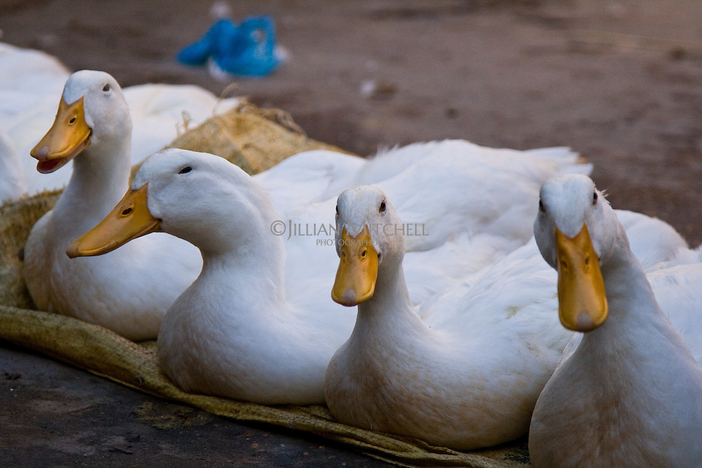 Ducks sitting in a row at the market.
