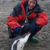 Enduring rain, photographer Gordon Wiltsie encounters fearless gentoo penguin chicks on a beach on Aitcho Island, Antarctica.