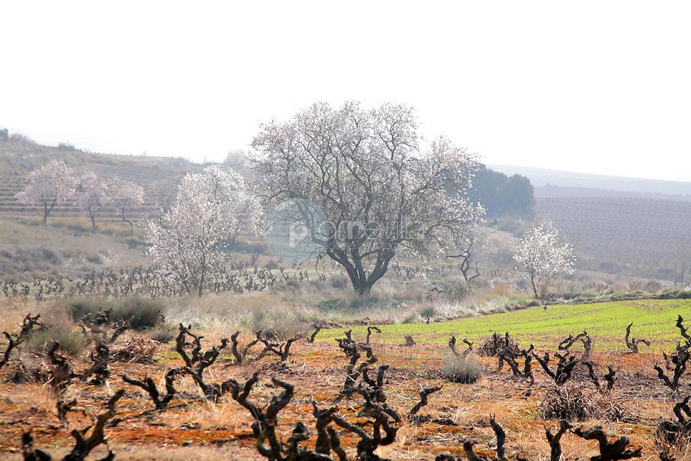 Viñedos centarios. La Rioja ©Daniel Acevedo / PILAR REVILLA
