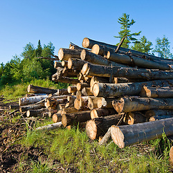 Logs from a recent timber harvest in Errol, New Hampshire.