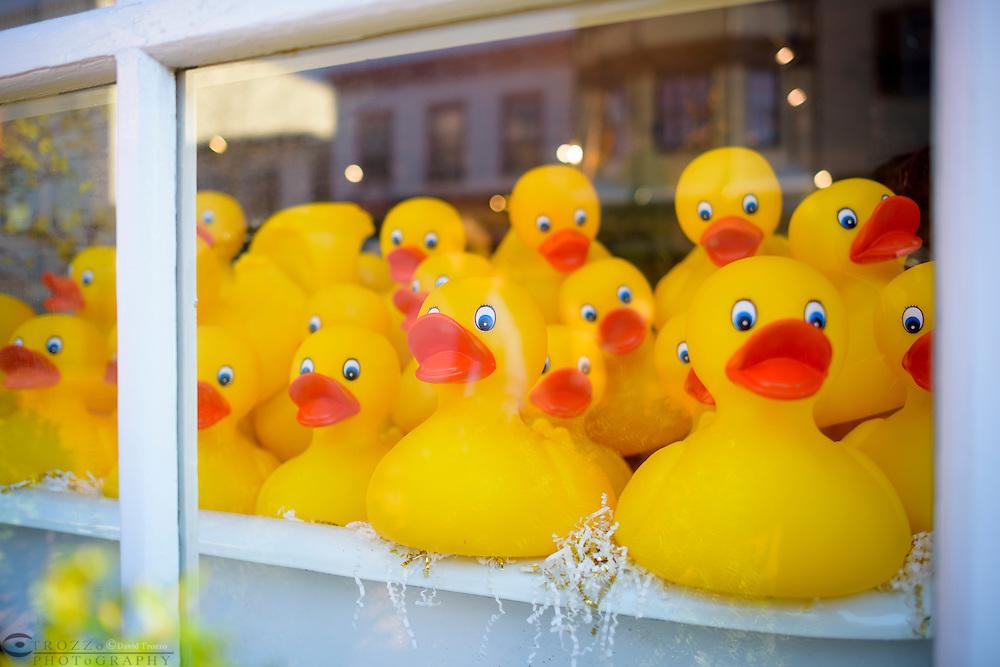 Window disply of yellow rubber ducks.