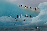 Adelie Penguins (Pygoscelis adeliae) on an iceberg, Weddell Sea.