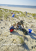 Child and Adult Volunteers Plant Dune Grass at Cape May Point, South Jersey, NJ