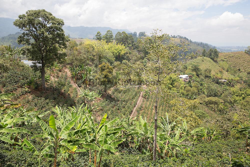 Salento, Quindío, Colombia - 05.09.2016        <br /> <br /> Impression of the Colombian coffee region. One of numerous coffee plantation near the village Salento, in the central range of the Colombian Andes Mountains.<br /> <br /> Eindruecke aus der kolumbianische Kaffeeanbauregion. Eine von zahlreichen Kaffeeplantage nahe des Dorfs Salento, in der Zentralkordillere der kolumbianischen Anden.<br /> <br /> Photo: Bjoern Kietzmann