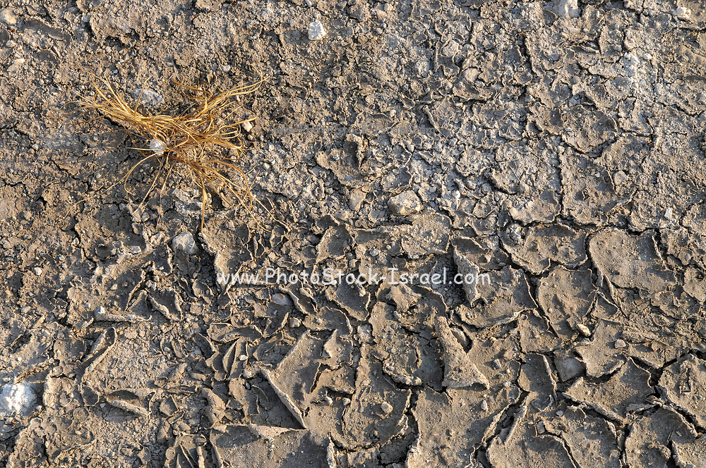 environmental concept, Water shortage and drought. Dry cracked mud