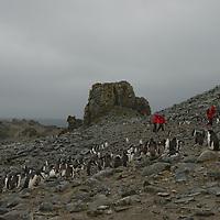 Tourists explore a Chinstrap Penguin rookery on Half Moon Island, Antarctica.