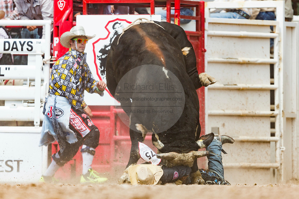 Bull rider Lon Danley is gored by a bull during the Bull Riding finals at the Cheyenne Frontier Days rodeo in Frontier Park Arena July 26, 2015 in Cheyenne, Wyoming. Danley was uninjured and walked off the arena.