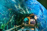 The Passages of the Deep exhibit tunnels under seawater at Oregon Coast Aquarium, Newport, Oregon, USA.