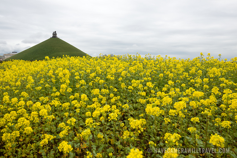 Yellow wildflowers grow in a field where the Battle of Waterloo was fought on June 18, 1815. In the background is the Lion's Mound (Butte du Lion), an artificial hill built on the battlefield of Waterloo to commemorate the location where William II of the Netherlands was injured during the battle. The hill is situated on a spot along the line where the Allied army under the Duke of Wellington's command took up positions during the Battle of Waterloo.