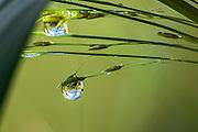 Raindrop on a blade of grass after a rain