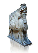 Stone statue of a winged bull. From city gate no 3,  Inv AO 19859 from Dur Sharrukin the palace of Assyrian king Sargon II at Khorsabad, 713-706 BC.  Louvre Museum Room 4 , Paris .<br /> <br /> If you prefer to buy from our ALAMY PHOTO LIBRARY  Collection visit : https://www.alamy.com/portfolio/paul-williams-funkystock/ancient-assyria-antiquities.html  Refine search by adding background colour, place, subject, museum etc into the LOWER SEARCH WITHIN GALLERY box to <br /> <br /> Visit our ANCIENT ASSYRIAN PHOTO COLLECTIONS for more photos to download or buy as wall art prints https://funkystock.photoshelter.com/gallery-collection/Ancient-Assyrian-Art-Artefacts-Antiquities-Historic-Sites-Pictures-Images-of/C0000cjRqQyJjLag