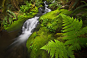 A small creek in the Quinalt Rainforest, Olympic National Park.
