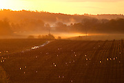 vineyard in early morning mist chateau pey la tour bordeaux france