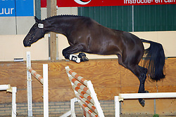 403-Unique R<br /> KWPN Paardendagen Ermelo 2004<br /> Photo © Hippo Foto