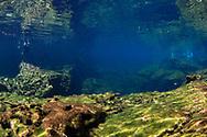 Cenotes El Eden-Pondera, Yucatan peninsula, Mexico.