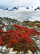 Tundra foliage turns red in early September above the Harding Icefield, in the Kenai Mountains, Kenai Fjords National Park, Alaska, USA. The only road into Kenai Fjords National Park is a spur of the Seward Highway to Exit Glacier, one of the most visited glaciers in Alaska. Exit Glacier was named after the exit of the first recorded crossing of Harding Icefield in 1968. A trail ascends alongside Exit Glacier to overlook its source in the Harding Icefield.