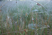 spider in web with dew drops