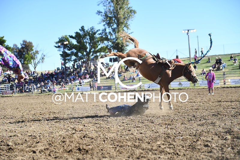 Mini bronc riding, Marysville 2018<br /> <br /> <br /> UNEDITED LOW-RES PREVIEW<br /> <br /> <br /> File shown may be an unedited low resolution version used as a proof only. All prints are 100% guaranteed for quality. Sizes 8x10+ come with a version for personal social media. I am currently not selling downloads for commercial/brand use.
