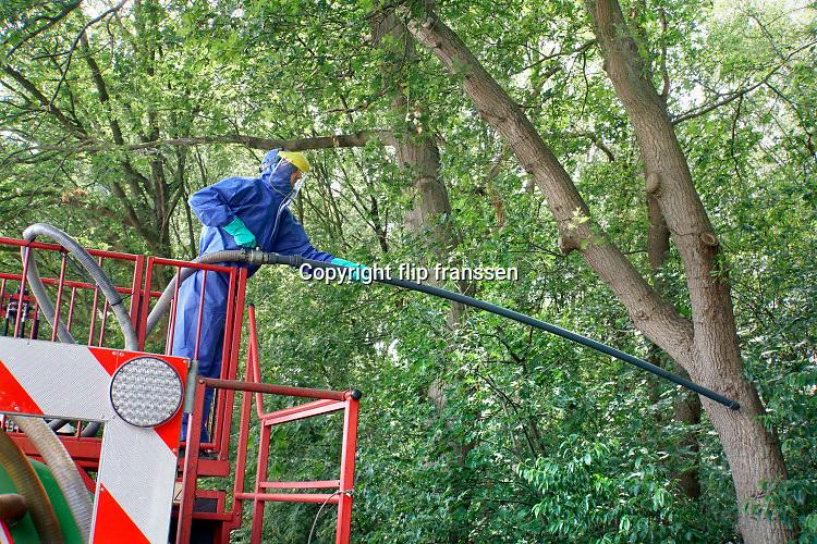 Nederland,Wijchen, 15-6-2020 Een nest van de eikenprocessierups zit ingekapseld aan een boom . eikenprocessierupsen, kolonie, nest . een verdelgingsbedrijf bestrijdt de nesten door ze met een grote stofzuiger op te zuigen. De man heeft beschermende kleding aan tegen de brandhaartjes . Foto: Flip Franssen