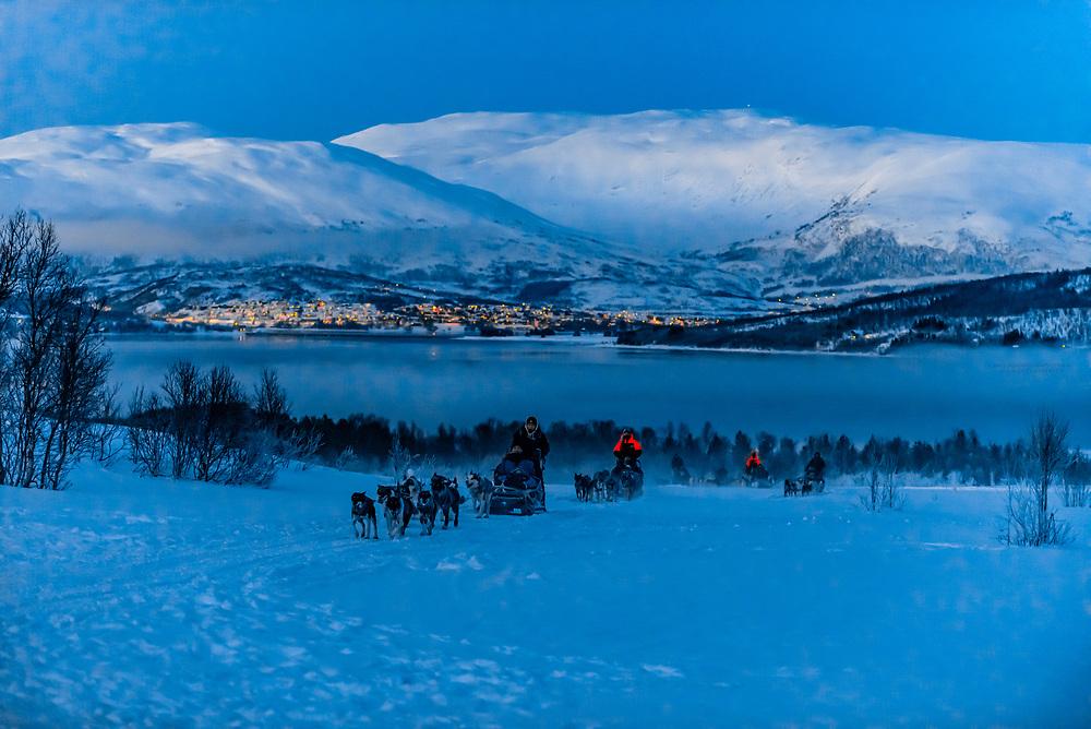 Dog sleds coming up a hill with Hakoya Island behind, Tromso Wilderness Centre (Tromso Villmarkssenter), Kvaloya Island, near Tromso, Arctic, Northern Norway.