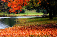 A  solitary bench provides for a relaxing view of a serene autumn setting.