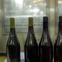 South America, Chile, Santiago. Wine bottles in production at Santa Rita Winery.