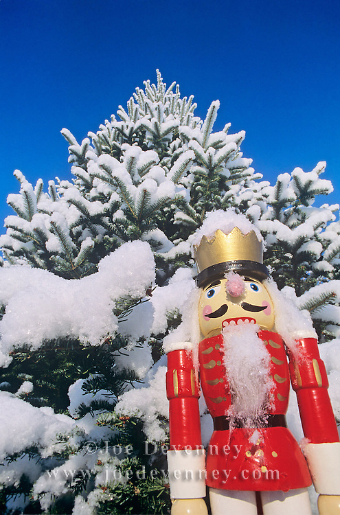 A nutcracker in front of a fir tree covered in snow. Christmas holiday decoration against a clear blue Maine sky.