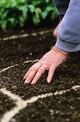 Sowing seeds outdoors<br /> Lightly covering seeds with soil