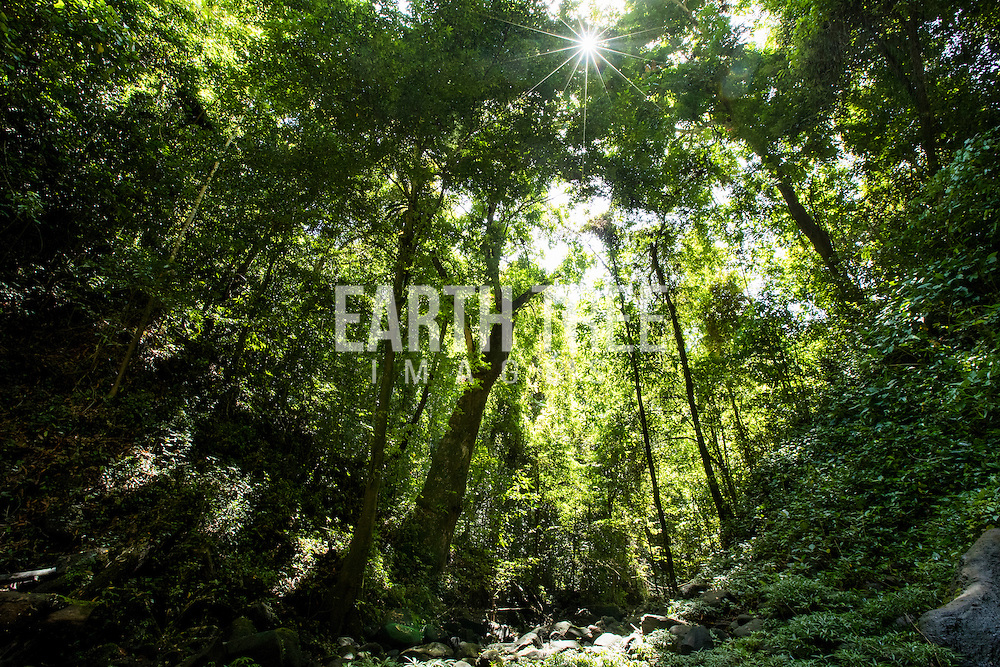 Under the canopy, Soraya District, Leuser Ecosystem, Sumatra, Indonesia, Lat : 2,55.3582N Long: 97,56.0207E. Photo: Paul Hilton for RAN Forest cover, Leuser Ecosystem, Sumatra, Indonesia. The Leuser Ecosystem is home to the largest extent of intact forest landscapes remaining in Sumatra and it is among the most biologically abundant landscapes ever described. Photo: Paul Hilton for Earth Tree Images