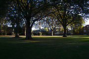 Light and shadow of trees in Wapping Gardens in Wapping, London, England, United Kingdom.