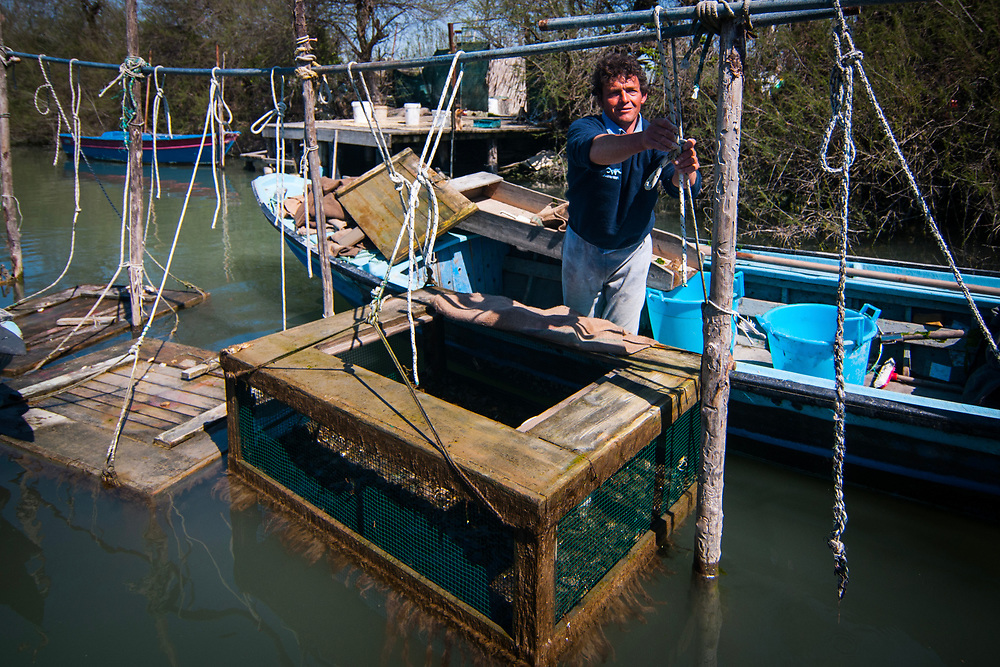 VENICE, ITALY - APRIL 2018. <br /> Emiliano, a moecante, crabs fisherman, explains his work to tourists in his fishing area while pulling up a 'viero', a wooden box where the fisherman checks the state of the crabs, during the fishing tour.