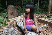 Surui girl with logged tree trunk. Her body is painted with traditional blue/black tattoos. Illegal logging by timber traffickers a few months. Rainforest canopy destroyed, timber and sawdust everywhere. Small trees and undergrowth damaged. <br /><br />An Amazonian tribal chief Almir Narayamogo, leader of 1350 Surui Indians in Rondônia, near Cacaol, Brazil, with a $100,000 bounty on his head, is fighting for the survival of his people and their forest, and using the world's modern hi-tech tools; computers, smartphones, Google Earth and digital forestry surveillance. So far their fight has been very effective, leading to a most promising and novel result. In 2013, Almir Narayamogo, led his people to be the first and unique indigenous tribe in the world to manage their own REDD+ carbon project and sell carbon credits to the industrial world. By marketing the CO2 capacity of 250 000 hectares of their virgin forest, the forty year old Surui, has ensured the preservation, as well as a future of his community. <br /><br />In 2009, the four clans and 25 Surui villages voted in favour of a total moratorium on logging and the carbon credits project. <br /><br />They still face deforestation problems, such as illegal logging, and gold mining which causes pollution of their river systems