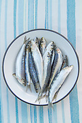 Close up of fresh anchovy fish on enamel plate against blue striped table cloth, Lesbos, Greece