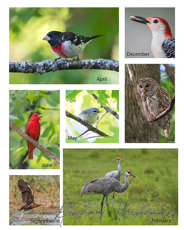 """2018 Birds of Tennessee Calendar - 8x11<br /> <br /> I mostly focused on migratory birds with this collection, rather than those that Tennessee natives see year round at feeders. Several are only found within limited habitats and limited areas of the state.<br /> <br /> To purchase, click """"Add to Cart"""" and select the 8x12 Print option. All calendars are a standard Matte finish. Price is $15 plus $2.50 Shipping and handling (US Residents)"""