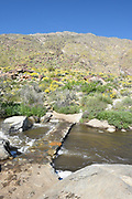 Tahquitz Canyon Creek with a Stone Bridge and Trail