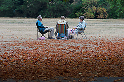 ©Licensed to London News Pictures 14/08/2020             Greenwich, UK. A family enjoy a picnic amongst fallen leaves. Parched grass is joined by early autumnal leaves on the ground in Greenwich Park, Greenwich, London as the heatwave comes to an end leaving a humid and cloudy day today. Photo credit: Grant Falvey/LNP