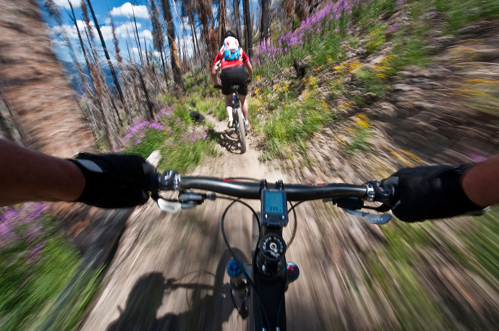 Mountain biker chases another biker through wildflowers and forest fire burn on Sun Valleys Baldy Mountain trail system creating a motion blur through shutter and bike speed MR. Licensing and Open Edition Prints.