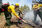 22 JUNE 2010 - FLAGSTAFF, AZ: Bob Urban (CQ) from Beaver Valley FD works a hot spot on the line at the Schultz Fire burning north of Flagstaff, AZ. The fire has consumed more than 12,000 acres of forest land and burned within a few feet of homes in some neighborhoods in Flagstaff.   PHOTO BY JACK KURTZ