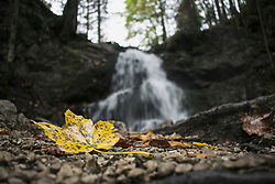 Close-up of yellow maple leaf and waterfall in the background, Josefstal, Bavaria, Germany