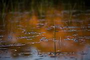 Aquidauana_MS, Brasil...Lago da Fazenda Rio Negro no Pantanal...The lake of Rio Negro farm in Pantanal...Foto: JOAO MARCOS ROSA / NITRO