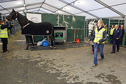 Donnerfee of Claudia Fassaert with Ingrid Dujardin<br /> Departure of the horses from Liege Airport to Lexington<br /> Alltech FEI World Equestrian Games - Kentucky 2010<br /> © Dirk Caremans