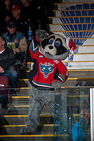 KELOWNA, CANADA - DECEMBER 7: Rocky Racoon, the mascot of Kelowna Rockets stands with the fans against the Seattle Thunderbirds on December 7, 2016 at Prospera Place in Kelowna, British Columbia, Canada.  (Photo by Marissa Baecker/Shoot the Breeze)  *** Local Caption ***
