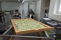 SCHWEIZ - WETZIKON - Nudelwerkstatt 'La Martina' hier Tortelloni aus Weizen und Spinat auf einem Gitter - 05. Oktober 2016 © Raphael Hünerfauth - http://huenerfauth.ch