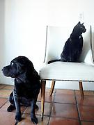 Pet Portrait, Back dog black cat, Lucy & Roscoe P.