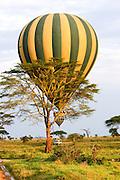 Tanzania Hot air balloon safari October 2008