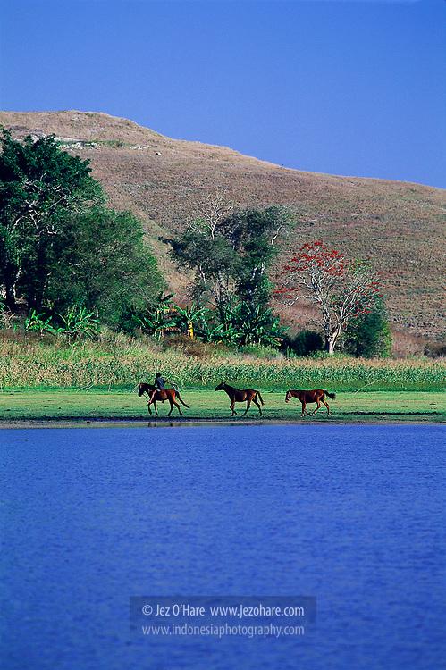 Kuda, Sumba Timur, Nusa Tenggara Timur, Indonesia.